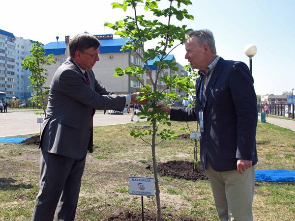 Botschafter S. E. Ulrich Brandenburg und Helmut Hinrichs schmücken den Partnerschaftsbaum Machatschkala-Oldenburg.